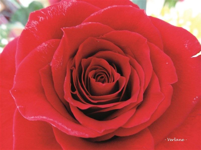 Coeur rose rs